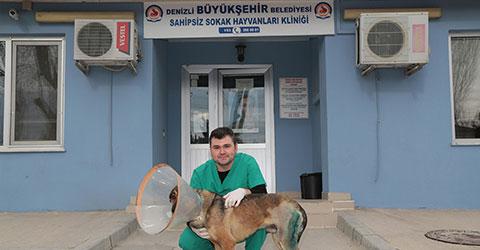 denizli-buyuksehir-sokak-hayvanlari-klinigi-sokak-kopegine-doku-nakli-ic
