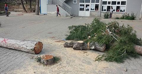 denizli-serinhisar-okul-bahcesindeki-agaclar-kesildi-1