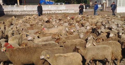 3.5 milyon hayvan sigortalandı 94